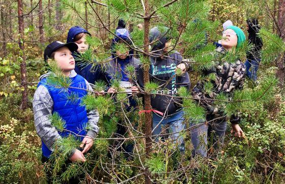 Iepazīstam mežu nozari